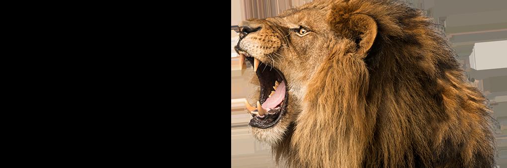LionSmallWide